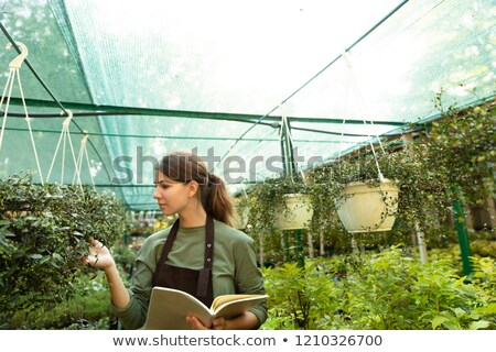 Woman gardener touching plant in greenhouse looking aside. Stock photo © deandrobot
