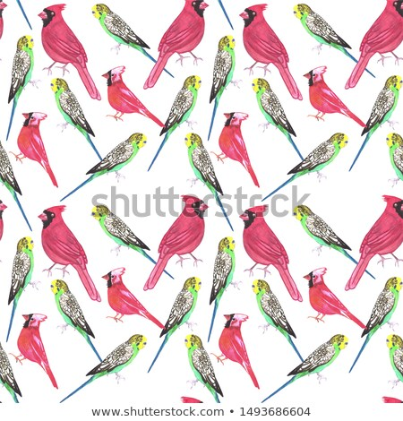 Northern cardinal male and budgies bird seamless watercolor birds painting background Stock photo © shawlinmohd