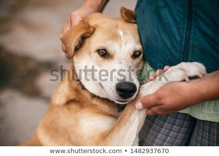Hajléktalanság kutyák csoport kutya város nap Stock fotó © joyr