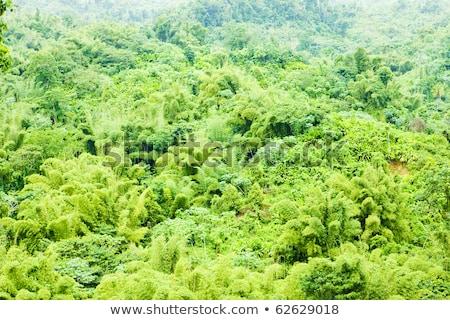 Grenada Karib erdő tájkép utazás növények Stock fotó © phbcz