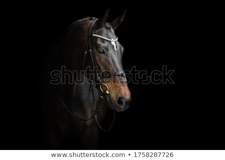 equestrian with horses Stock photo © phbcz