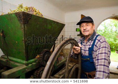 Vintner pressing grapes Stock photo © nyul