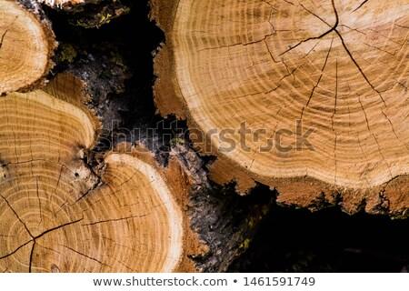 структуры дерево хорошие древесины лес домой Сток-фото © sibrikov