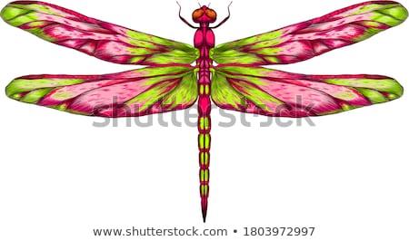 紅色 蜻蜓 眼 綠色 黑色 支 商業照片 © yoshiyayo