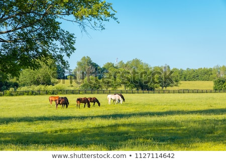 horses on pasture nature farm scene Stock photo © goce