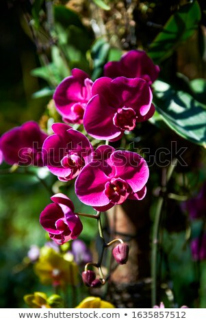 Extreme Closeup of Beautiful Lilac Pansy Stock photo © scheriton