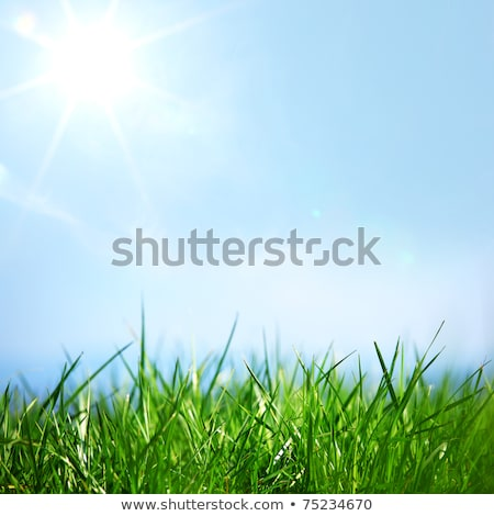 Textured Grass and Sky Background Stock photo © frannyanne