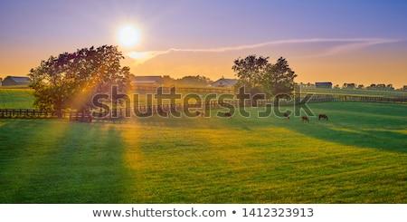 gyönyörű · reggel · tájkép · fiatal · ló · fű - stock fotó © hraska