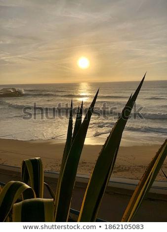 Sunset in Portugal Stock photo © ElinaManninen