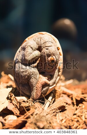 Baby dinosaurus embryo cartoon illustratie ei Stockfoto © fizzgig