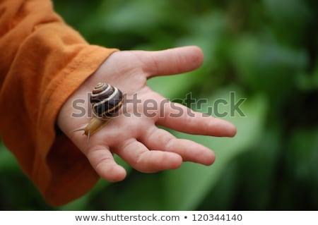 Mani mano bambino estate lumaca terra Foto d'archivio © Laks