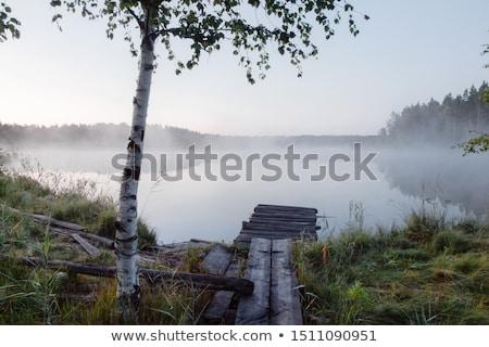 huş · ağacı · ağaç · orman - stok fotoğraf © meinzahn