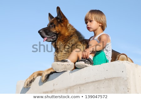 german shepard family Stock photo © tiero