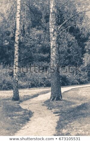 Floresta estrada lama velho monocromático foto Foto stock © ankarb