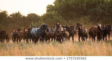 лошади луговой лошадей осень время Сток-фото © castenoid