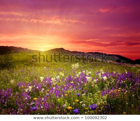 Zonsondergang voorjaar veld klaar zaaien storm Stockfoto © CaptureLight