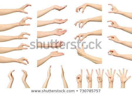 手 · 白 · マニキュア · 触れる · 女性 · 花 - ストックフォト © dadoodas