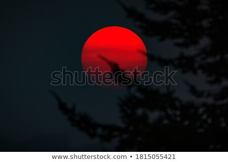 sunset obscured by wildfire smoke stock photo © pixelsaway