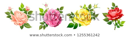 Four colorful roses Stock photo © bluering
