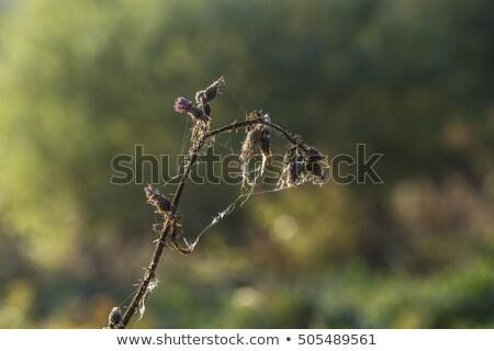 чистой · утра · свет · Полевые · цветы · луговой - Сток-фото © meinzahn