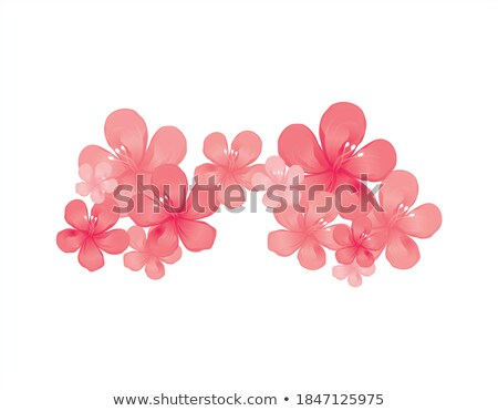 Foto d'archivio: Senza · soluzione · di · continuità · sakura · fiori · isolato · bianco · eps