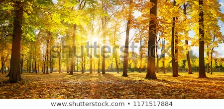 sunny autumn Nature background; October forest landscape Stock photo © Konstanttin