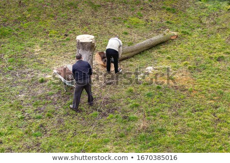 Lumberjack with ax cutting down trees in forest Stock photo © jossdiim