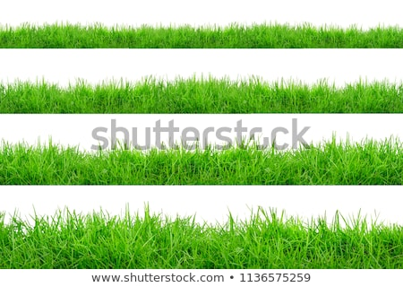 big set green grass and leaves borders white background stock photo © barbaliss