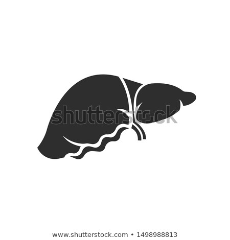 Liver icon on a white background Stock photo © Imaagio