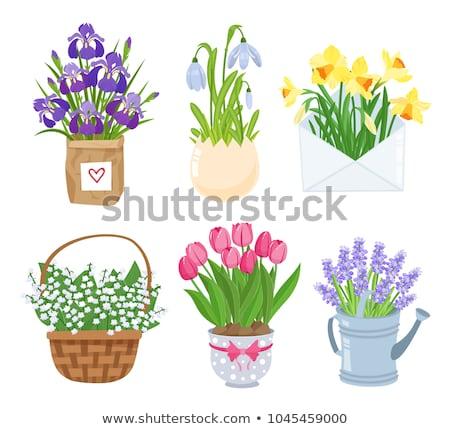 Foto stock: Rosa · flores · cesta · jacinto · isolado