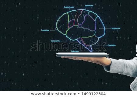 tablet · cervello · relazione · medici - foto d'archivio © ra2studio