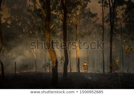 Bush fuoco brucia rurale Australia estate Foto d'archivio © lovleah