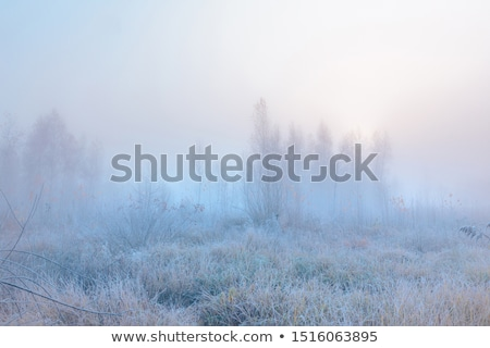 Sunlight on frosted leaves Stock photo © backyardproductions