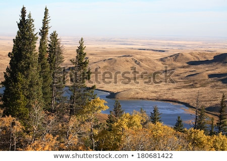 Reesor Lake Cypress Hills Stock photo © pictureguy