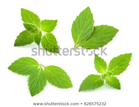 Yeşil nane yaprakları beyaz doğa yaprak Stok fotoğraf © justinb