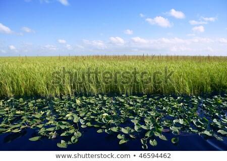 Blue · Sky · Флорида · зеленый · растений · горизонте · природы - Сток-фото © lunamarina