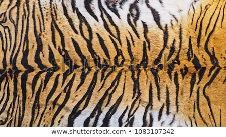 тигр · детали · темно · фон - Сток-фото © hanusst