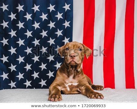Başkan gün Amerika Birleşik Devletleri Amerika renkli vektör Stok fotoğraf © bharat