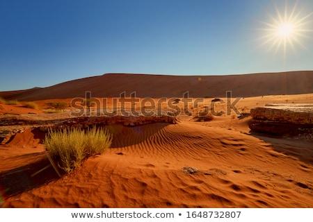 死んだ ナミビア 2013 観光客 砂漠 公園 ストックフォト © imagex