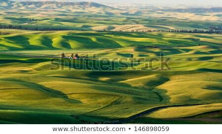 zöld · domb · búza · kék · ég · fű · nap - stock fotó © mikko