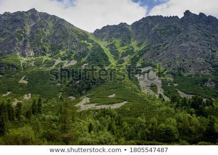 Szczyt turystycznych ścieżka wysoki góry mętny Zdjęcia stock © Kayco