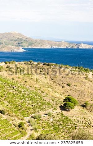bağ · kapak · ayı · deniz · feneri · asma · tarım - stok fotoğraf © phbcz