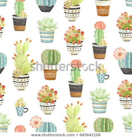 cactus in pot with red background stock photo © punsayaporn