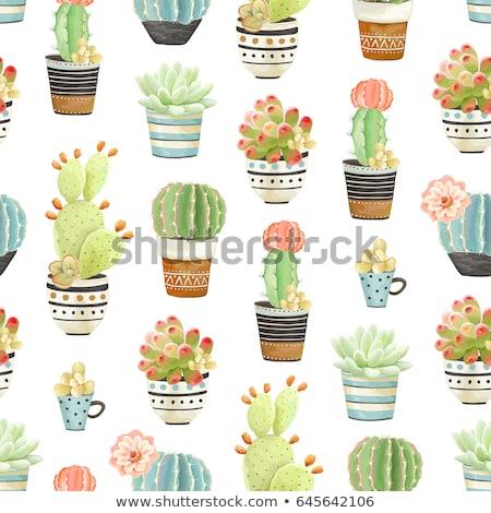 Cactus pot Rood voorraad foto boom Stockfoto © punsayaporn