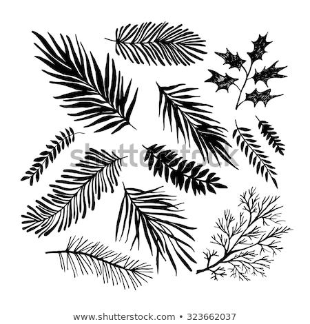 silhouet · pijnboom · sluiten · shot · berg · steen - stockfoto © amok