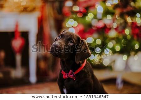 Karácsony kutyakölyök réteges illusztráció könnyű kutya Stock fotó © DzoniBeCool