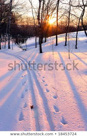 tél · tájkép · fa · sikátor · naplemente · fényes - stock fotó © meinzahn