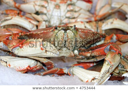 dungenes crab Stock photo © tdoes
