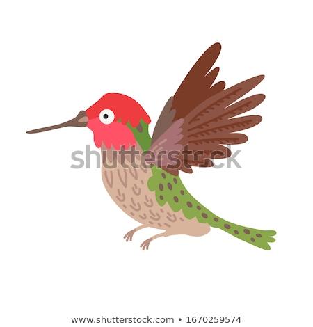 улыбаясь мало hummingbird Cartoon иллюстрация улыбка Сток-фото © cthoman
