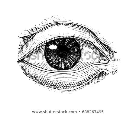 human eyes illustration vector icon sign Stock photo © blaskorizov